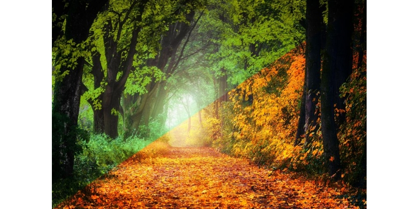 How to Turn Autumn into Summer in Lightroom and Create Light Effect in Photoshop