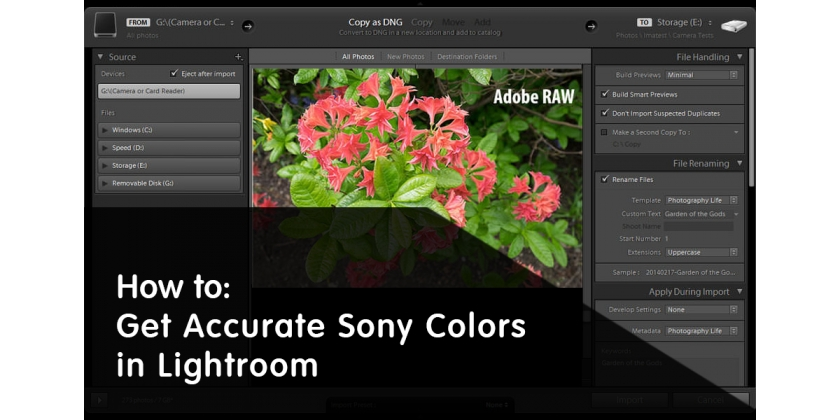 How to Get Accurate Sony Colors in Lightroom